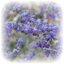 bg_flower